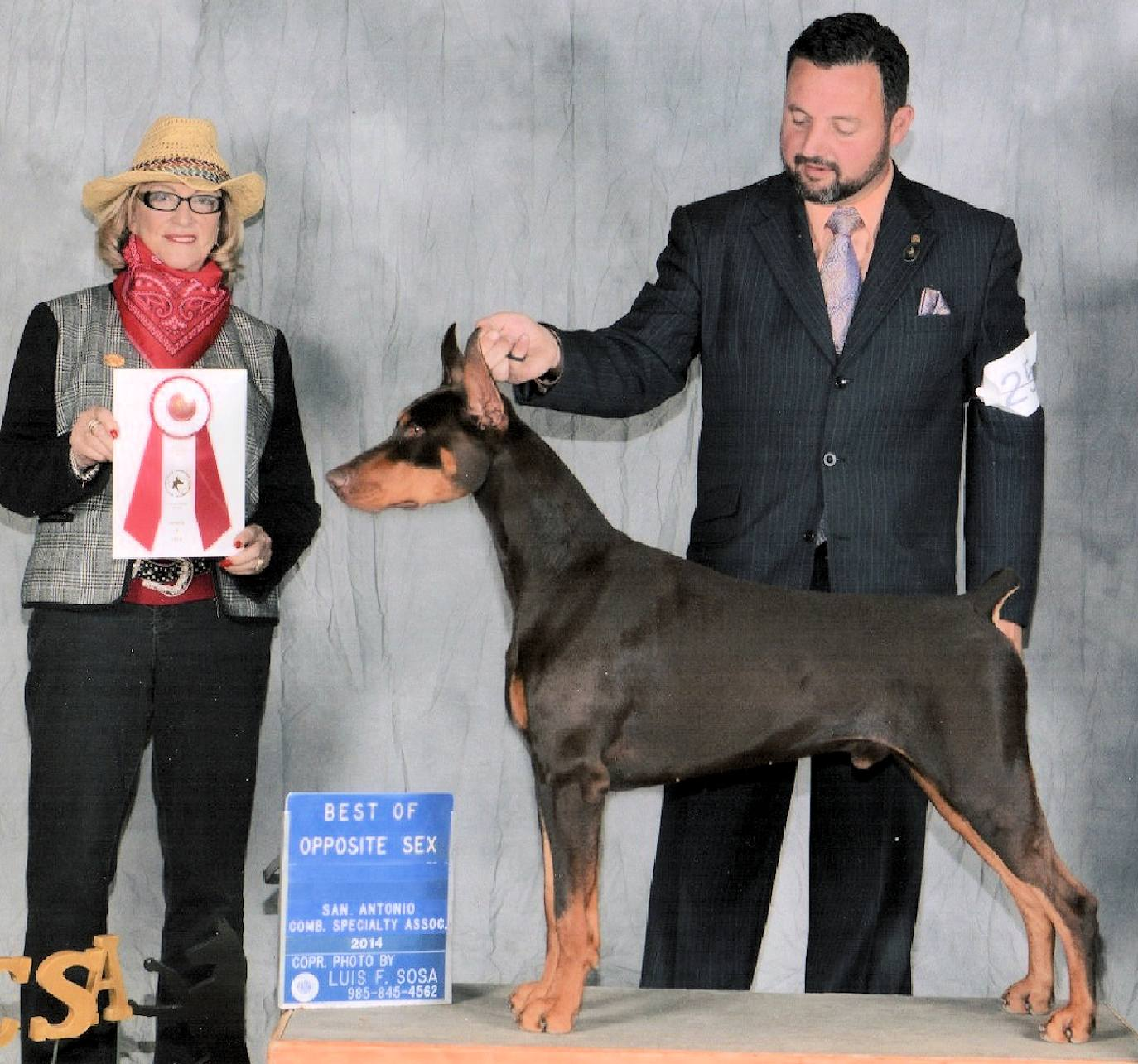 Champion Doberman male