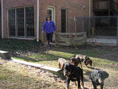 socialized doberman puppies